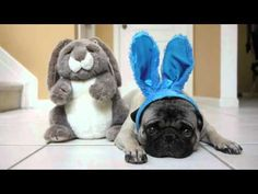 Buddy the Mischievous Pug: Happy Easter