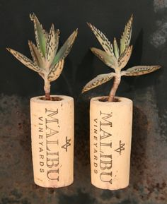Succulent Cork Magnets Malibu Set of 2 by AlissaRose on Etsy