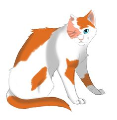 Brightkit,brightpaw,lostface,brightheart loss her eye to a dog bluestar gave her lostface as her warrior name but cloudtail said for Firestar to change it and her name became brightheart mate is cloudtail kit is whitewing