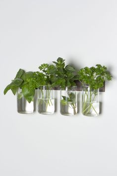 Manchester Glass Set - Anthropologie.com - would remove the glass prior to towing, so cute for herb storage.