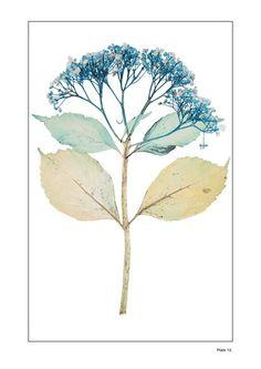 NICK KNIGHT  Flora Edition, 1997 - 2010
