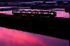 drhaniwa:  夜の帳が下りる頃、夕焼けが反射して、一面ピンクの世界が広がった。幻想的な世界がピークを迎えたとき、まるで狙っていたかのように西鉄313形が駆け抜けて行った。たった3分だけ起きた自然の芸術。この奇跡の瞬間は一生忘れないと思う。 Twitter / Railway415