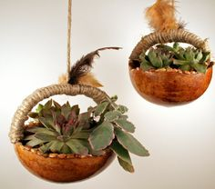 Set of two gourd succulent and cactus hanging by EricsGourdArt