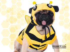 there's something about pugs in costumes that's just so stinking cute