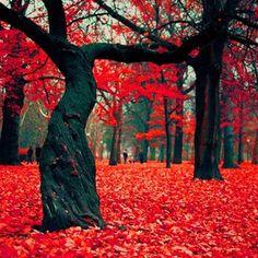 The Crimson Forest in Gryfino, Poland.......