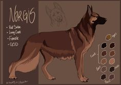 Ended up changing her full name. This is less of a mouthful and fits her design/name a bit more. xP Full Name: I Dream In Color Call name: Nargis Breed: German Shepherd Dog (Long coat) Gender: Fema...