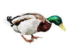 "Original A3 Mallard Duck ""Duck Down"" Mixed Media Painting. $390.00, via Etsy."