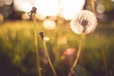 Last Blowball Trying To Survive Free Image DownloadPic Jumbo