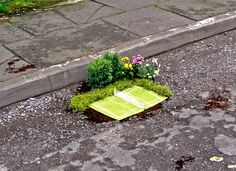 Best idea ever! the pothole gardener' project turns london's potholes into tiny worlds full of living plants