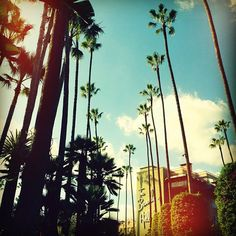 The Beverly Hills Hotel! Love this place! I've been there many times!