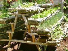 Planting in plastic bottles