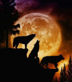 "Wild Animals: ""Wolf Moon"" and ""The Anasazi"" Wild Animals: ""Wolf Moon, and the Anasazi"" January, the cruelest month. Wolf Moon, the Anasazi say Wolf Love, Beautiful Creatures, Animals Beautiful, Print Image, Tier Wolf, Howl At The Moon, Wolf Pictures, Beautiful Wolves, Wolf Spirit"