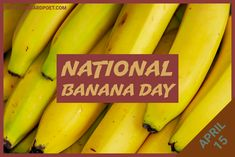 Celebrate National Banana Day on April 15 with this fun collection of quotes, jokes, captions, fun facts, and FAQs. Go bananas! #banana #bananas #quotes #jokes
