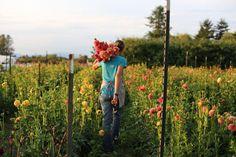 Growing Great Dahlias {part 2}: http://www.floretflowers.com/2014/02/flower-focus-growing-great-dahlias-part-2/