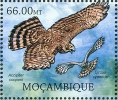 Hen Harrier stamps - mainly images - gallery format