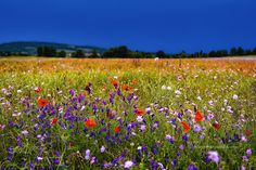 Wunderbare Welt — euph0r14:   landscape | Flowers | by...