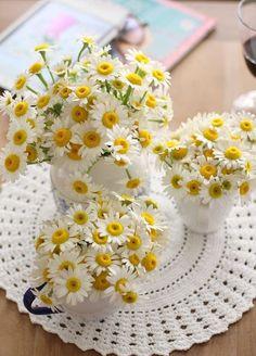 Belles y delicadas margaritas. Little Flowers, My Flower, Pretty Flowers, Flower Power, Daisy Love, Daisy Wedding, Yellow Springs, Flowers Nature, Belle Photo
