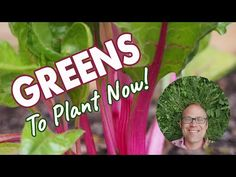 Five Fresh Greens to Grow All Round (Video) | Old Farmer's Almanac