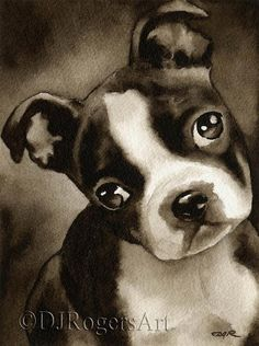 Boston Terrier Puppy Sepia Art Print by Watercolor Artist DJ Rogers Black Boxer Puppies, Boxer Puppies For Sale, Pug Puppies, Terrier Breeds, Terrier Puppies, Terrier Mix, Bull Terrier, Dog Breeds, I Love Dogs