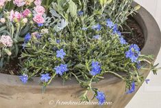 Container gardening in the shade can be a bit tricky. This list of blue plants for containers in the shade will have the pots on your patio, walkway or porch looking beautiful all summer long. Dry Shade Plants, Shade Garden Plants, Blue Plants, Tall Plants, Flowering Plants, Container Water Gardens, Container Plants, Container Gardening, Garden Yard Ideas
