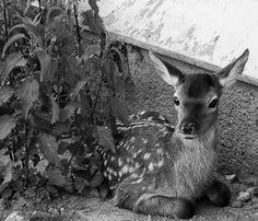 Pŕhľava a my Kangaroo, Roman, Animals, Animais, Animales, Animaux, Animal, Dieren, Kangaroos