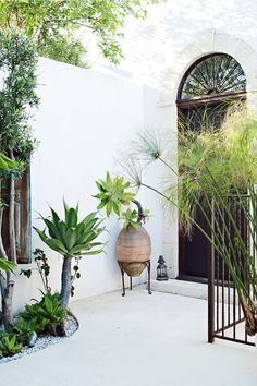 #SOFIHomewares - Classic Decorating Piece: Plants, Plants, Plants.  The walls and floor of this exterior entrance are rendered (for a smooth surface) then painted a cool white for a Mexican or Spanish house look.  Tropical Plants and urns complete the look.