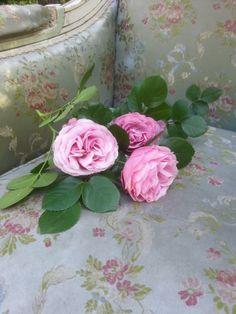 Des fleurs sur un fauteuil