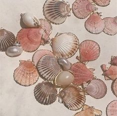 Read ♡Girly retro theme♡ from the story Themes by aesteticbitch (Mina) with 590 reads. Summer Aesthetic, Aesthetic Photo, Pink Aesthetic, Aesthetic Pictures, Color Composition, Tout Rose, Goddess Of Love, Oeuvre D'art, Sea Shells