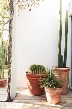 Tyler Haney Outdoor Voices Founder Interview, Home Tour - outdoor collection of cacti You are in the right place about cute Cactus Here we offer you the most - Patio Plants, Indoor Plants, House Plants, Indoor Cactus, Outdoor Cactus Garden, Cacti And Succulents, Cactus Plants, Cactus Art, Cactus E Suculentas