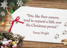 Christmas Ideas & Tips for Your Pets
