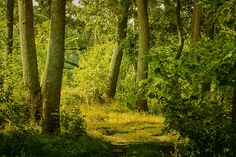 Light day in the wood by Natalia Flora on 500px