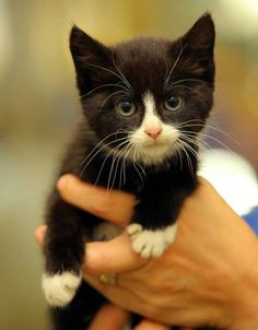This will be my future kitten. And by the way the site I got this from, this kitten survived either a 14 hour or a 14 mile, I can't remember, trip under the engine of a car and still manages to look this cute. Amazing.