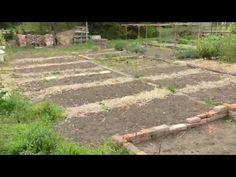 Lótetű szabadult a kertembe. Mit tegyek?! | Hobbikert.hu