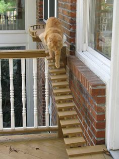Cat stairs to help older cats still get about. Cat Stairs, Outdoor Cat Enclosure, Cat Run, Cat Walk, Outdoor Stairs, Cat Playground, Cat Climbing, Outdoor Cats, Cat Accessories
