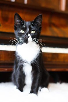 5 things you MUST do when you get a new kitten | Cityscape Bliss | Bloglovin'