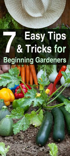 7 Tips and Tricks for Beginning Gardeners