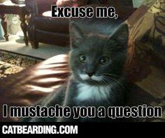 Cat Bearding | Official site for Photos of the new Cat Beard viral craze