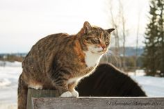 kitty at Hill Top Ranch named Manitoba, because she is so friendly!