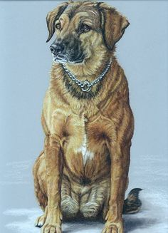 How to draw dog portrait in colored pencils tutorial by Fauna Art Studios.