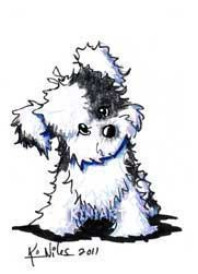 Art: Black And White Havanese By Artist KiniArt