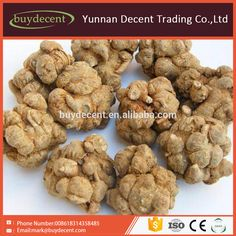 Good selling chinese Noto ginseng Extract panax noto ginseng energy supply product