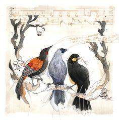 The evolutional branch of the Callaeidae Family consisted of only 3 birds – Tieke ( Saddleback ) – Kokako – and Huia.  The Huia has since evaporated –  Illustration : Rachel Walker