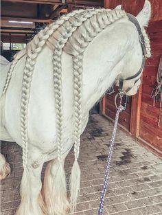 Cute Horses, Pretty Horses, Horse Love, Horse Mane Braids, Horse Braiding, Most Beautiful Horses, Animals Beautiful, Cute Animals, Gypsy Horse
