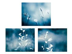 nature prints botanical print set of 3 prints by mylittlepixels