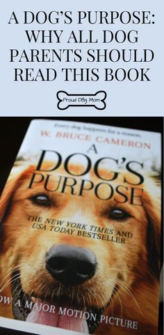 A Dog's Purpose: Why All Dog Parents Should Read This Book |