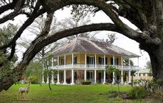 Mary Plantation in Braithwaite, Louisiana, the oldest surviving structure in Plaquemines Parish, will be sold at absolute auction-with the real estate and contents sold with no minimum price set, by Neal Auction Company on March 10, 2012. The house was built in 1795 and then expanded in the 1820's and features large open galleries upstairs and magnificent oak trees on the 7.5 acre property. A guest house is also located on the property. Mary Plantation is on the National Register