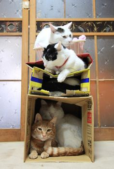 (via かご猫 Blog 3かいだて)