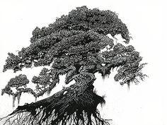 Dragon Tree by Stanley Morrison