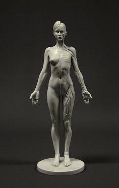 http://www.amazon.com/Female-Anatomy-Figure-10-5-inch-Anatomical/dp/B00UBZ5AU4/ref=pd_sim_sbs_328_2?ie=UTF8
