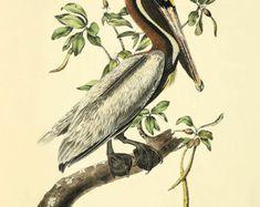 Antique Pelican art print Bird Print Nature print Antique prints bird art Victorian art home decor wall art Natural History bird wall art